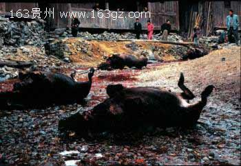 5L2T6IKy_开膛肢解的恶魔杰克 恐怖宰杀女人图片; 实拍血腥\